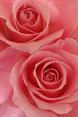 Photograph - Perfect Pink Roses by Jill Reger