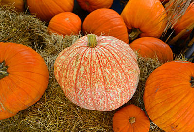 Photograph - Perfect Pumpkins by David Lee Thompson