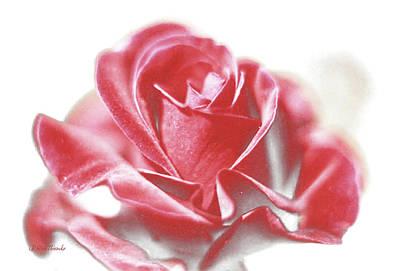 Mixed Media - Perfect Rose by Rick Thiemke