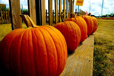 Photograph - Perfect Row Of Pumpkins by Marisela Mungia