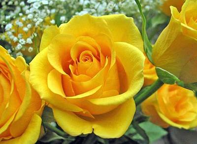 Photograph - Perfect Yellow Rose  by Sharon Duguay