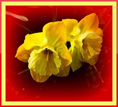 Photograph - Daffy-dills by Colette Merrill
