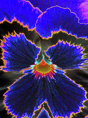Photograph - Perfectly Pansy 02 - Photopower by Pamela Critchlow