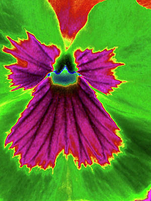 Photograph - Perfectly Pansy 04 - Photopower by Pamela Critchlow