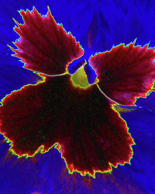 Photograph - Perfectly Pansy 05 - Photopower by Pamela Critchlow