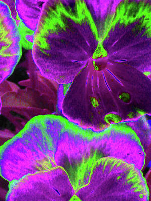 Photograph - Perfectly Pansy 11 - Photopower by Pamela Critchlow