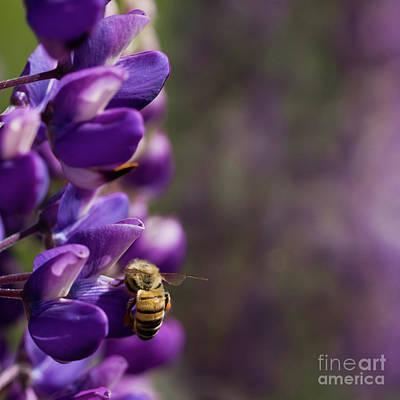 Photograph - Perfectly Purple by Liz Alderdice