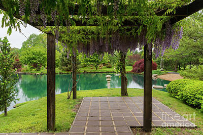 Photograph - Pergola Of Wisteria by Jennifer White