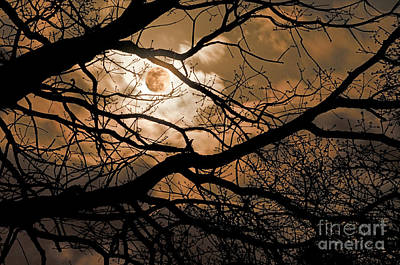 Perigee Moon In The Trees Art Print by Tamyra Ayles