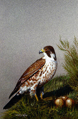 Painting - Perigrine Falcon With Eggs by Frank Wilson