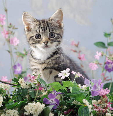 Photograph - Periwinkle Puss by Warren Photographic