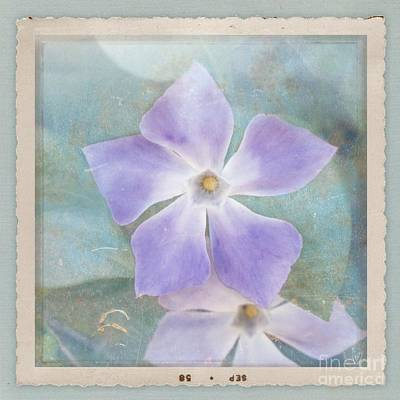 Periwinkle Stars Art Print by Cindy Garber Iverson