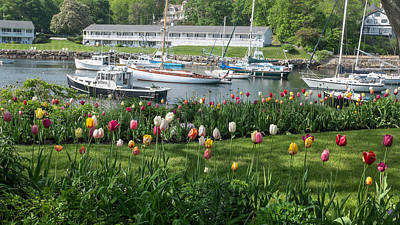 Sailboat Photograph - Perkins Cove Tulips by Joseph Smith