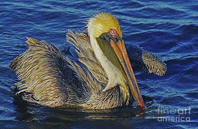 Perky Pelican II Art Print