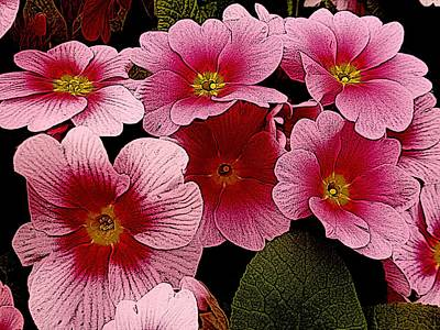 Photograph - Perky Pink by Dorothy Berry-Lound