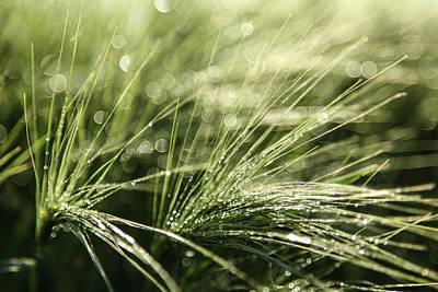 Photograph - Perls of Dew by Sebastian Worm