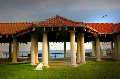 Photograph - Perro At The Pavilion by Diana Angstadt