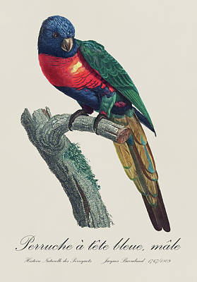 Parrot Painting - Perruche A Tete Bleue, Male / Rainbow Lorikeet, Male - Restored 19th Cent. Illustration By Barraband by Jose Elias - Sofia Pereira