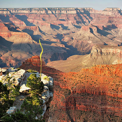 Photograph - Perseverance - Grand Canyon Landscape And Shadows by Gregory Ballos