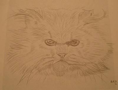 Persian Cat 4 Art Print by Bo Klinge