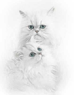 Photograph - Persian Kittens by David and Carol Kelly