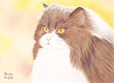 Pastel - Persian Kitty by Brenda Bonfield