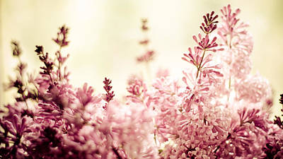 Persian Photograph - Persian Lilacs In The Sun by Maggie Terlecki