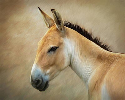 Donkey Photograph - Persian Onager by Tom Mc Nemar