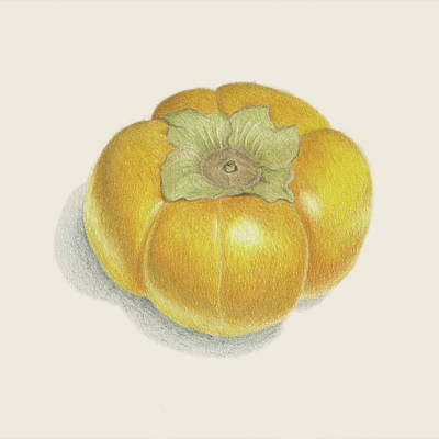 Local Food Drawing - Persimmon by Carlee Lingerfelt