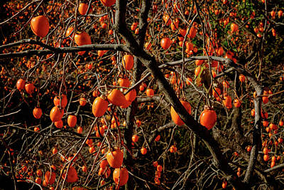 Photograph - Persimmon Heaven by Roy Cruz