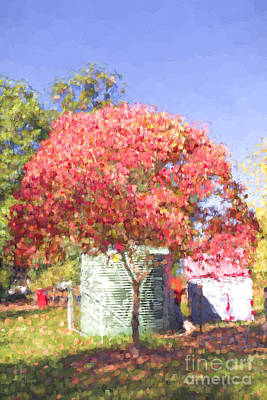 Photograph - Persimmon Tree by Elaine Teague