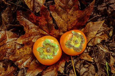 Photograph - Persimmons 3 by Ronda Broatch