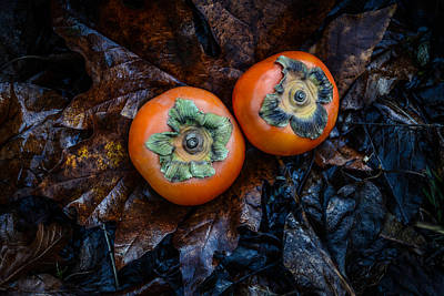 Photograph - Persimmons 4 by Ronda Broatch