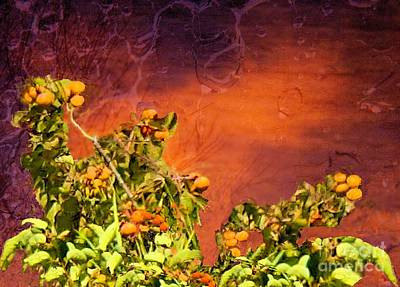 Photograph - Persimmons At Sunset by Janette Boyd