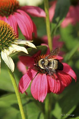 Photograph - Persistence Coneflower Bee Art by Reid Callaway