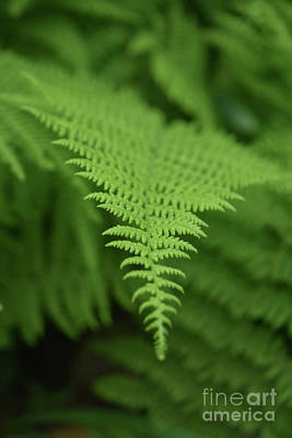 Photograph - Perspective Of A Fern Frond In The Wild by DejaVu Designs