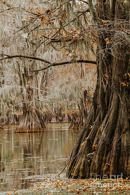 Photograph - Perspective Of Cypress by Iris Greenwell