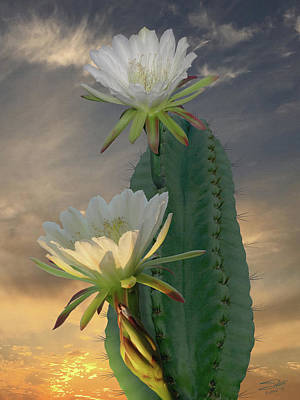 Photograph - Peruvian Apple Cactus by IM Spadecaller