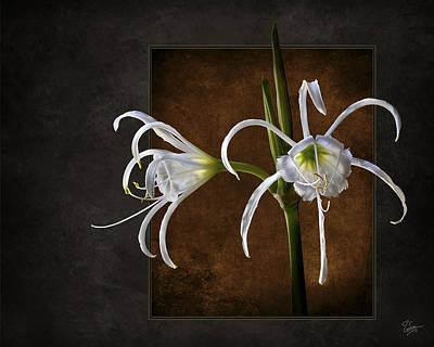 Photograph - Peruvian Daffodil by Endre Balogh