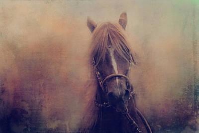 Peruvian Horse Art Print by Toni Hopper
