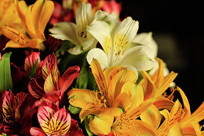 Photograph - Peruvian Lilies In Natural Light by Joni Eskridge