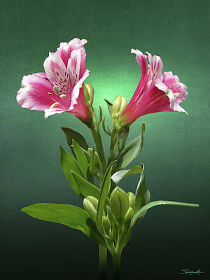 Digital Art - Peruvian Lily by M Spadecaller
