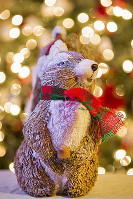 Christmas Squirrels Wall Art - Photograph - Pervy Christmas Squirrel by Bill Tiepelman