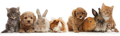 Photograph - Pet Animal Line Up by Warren Photographic