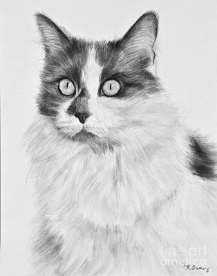 Drawing - Pet Cat Drawing Olivia by Kate Sumners