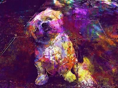 Pedigree Art Digital Art - Pet Dog Shih Tzu Pedigree Breed  by PixBreak Art