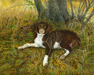 Painting - Pet Portrait - Springer Spaniel, Milly by Wayne Pruse