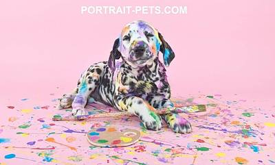 Pet Portraits With A Touch Of Humour Art Print