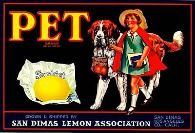 Pet Saint Bernard 1920s California Sunkist Lemons Art Print by Peter Gumaer Ogden