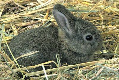 Photograph - Pet Wabbit by Frank Townsley
